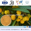 Free sample high quality best price natural organic Loquat Leaf Extract