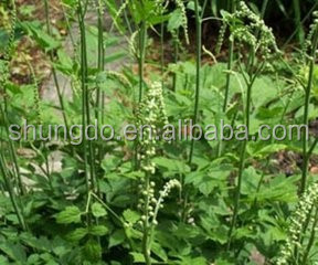 Nature Cimicifuga racemosa extract Triterpenoid saponin Black cohosh Triterpenoid Glycosides