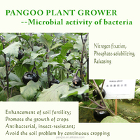 Complete line of beneficial bacteria as plant growth regulator