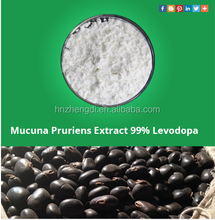Mucuna Pruriens Increases Sexual Desire in Men and Women