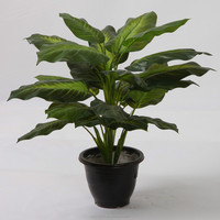 "19.7"" Tall Artificial Evergreen Plant Artificial Evergreen Ornamental Plants Wholesale"