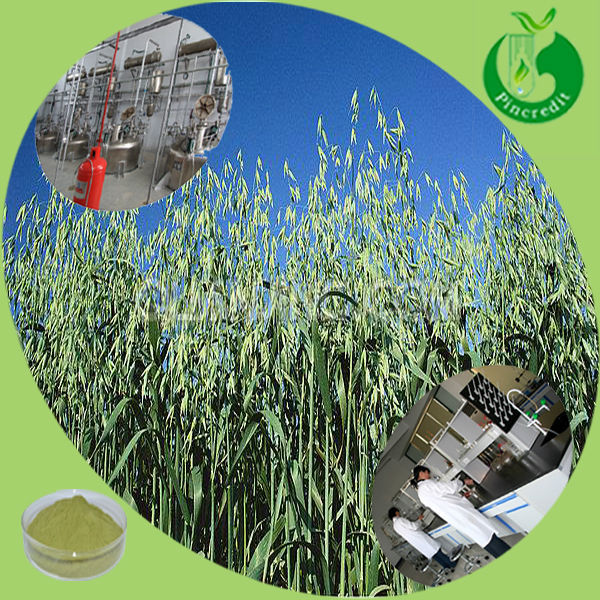 Free sample from GMP Oat grass powder Oat seedlings extract