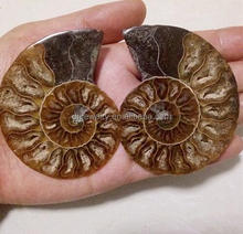 new products Madagascar natural polished Crystal Quartz Snail Pattern Ammonite Fossil for wholesale