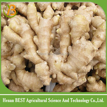 New crop vegetable buyer of dry ginger high quality