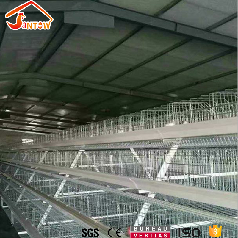 Automatic A-Type Multi-tier Chicken layer cage