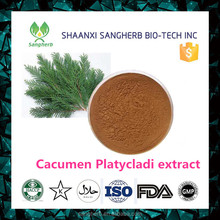 Pharmaceutical Grade Herb 10:1 Cacumen Platycladi Extract for tranquilizing the nerves