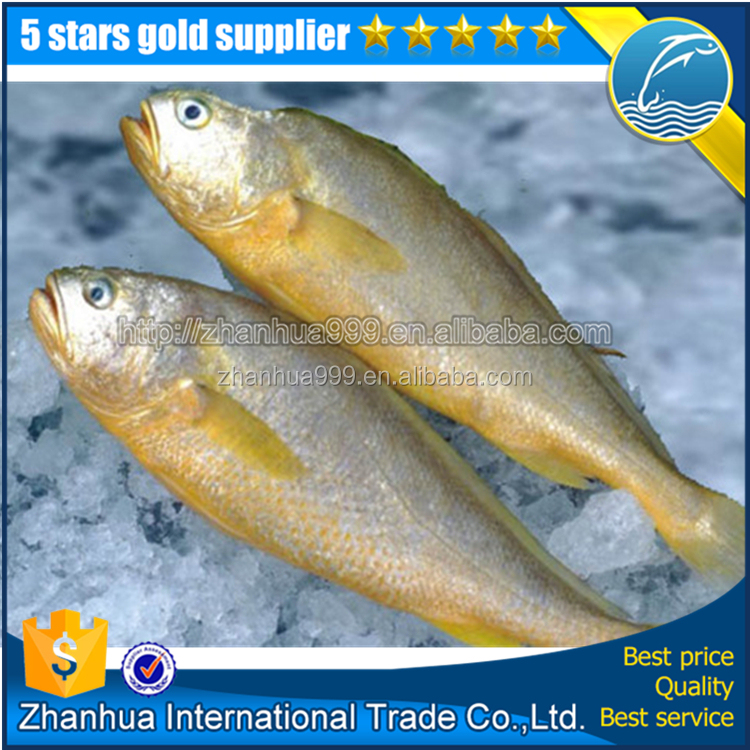Frozen Yellow Croaker Fish Maw
