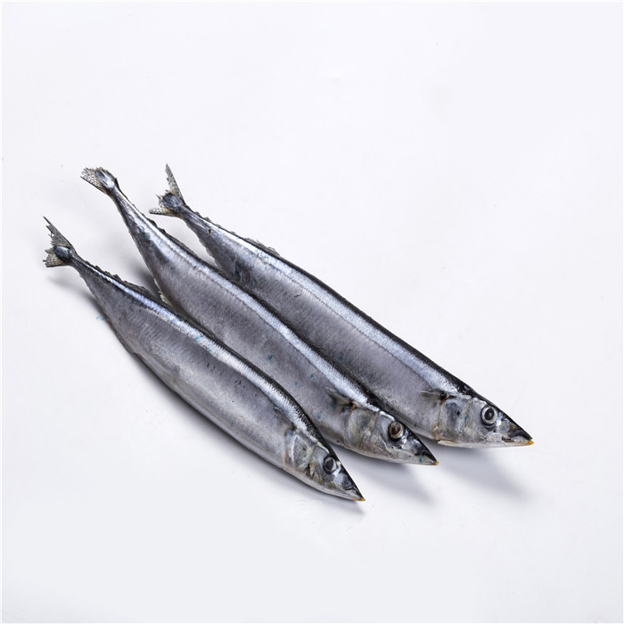 New Arrival Good Price Pacific Saury Cololabis Saira in Saury