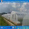 fiberglass agricultural film cover low tunnel greenhouse