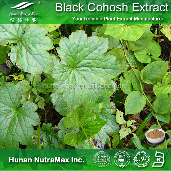 100% Natural Black Cohosh Extract , Black Cohosh Powder Triterpene Glycosides Polysaccharides 40%~70%