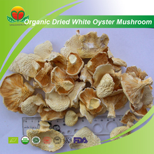 Most Popular Organic Dried White Oyster Mushroom