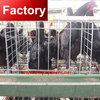 Direct factory chicken wire cage with free layout design