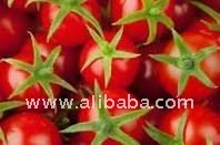 NO PRESERVATIVES italian CHERRY TOMATOES from south Italy pomodoro ciliegino