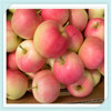 New Crop Chinese Fresh Apple Red Star Apple Apple