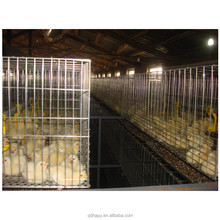 Poultry Chicken Farm Broiler Cage With Chicken House and Equipment design