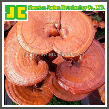 Supercritical CO2 Ganoderma Spore Oil/ reishi spore oil