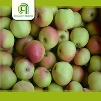 good brand green qinguan china qinguan apples from china