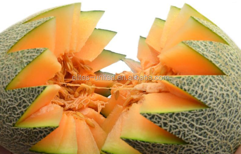 Fresh melon sweet melon price