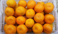 companies imported fruit orange fruit price