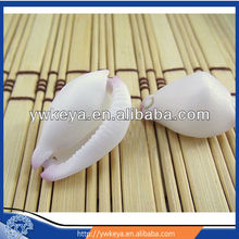 Wholesale seashells white moon seashell size 2-3cm aquarium decorations