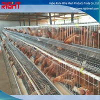 automatic chicken layer cage for sale (Africa,America,Austraila)