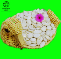 Raw Snow White Pumpkin Seeds,11cm 13cm 13mm