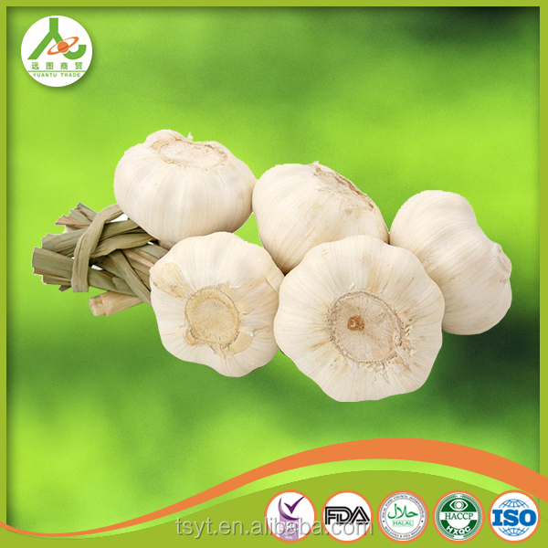 new crop fresh natural white garlic 5.0 cm exporter supplier