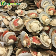 New Arrival Frozen 10-12CM Half Shell Sea Scallops