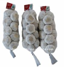 Fresh Garlic Producer In China-- High Quality & Low Price