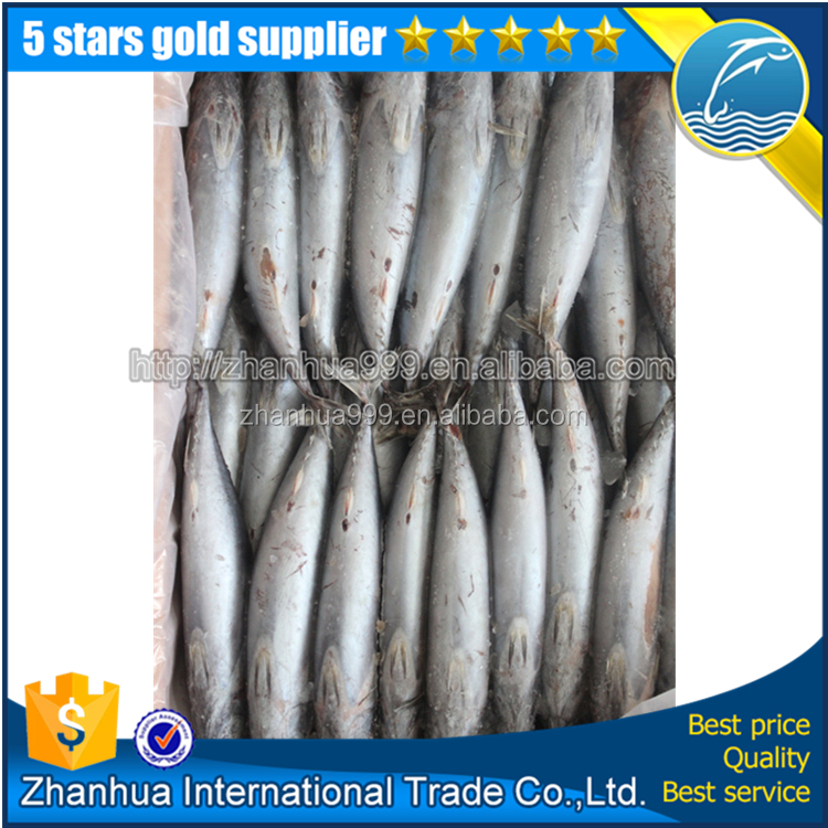 Frozen Bonito Fish With Prices For Sale