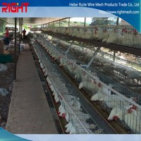 new product layer egg chicken cage for chicken house