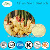 Natural Chinese Herbal Medicine Ginger Extract Powder