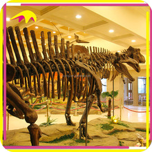 KANO5083 Amusement Park Life Size Real Dinosaur Skeleton