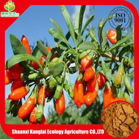 Chinese Herb Fresh Goji Berry Extract/Goji Polysaccharide Powder is On Sale with Free Sample
