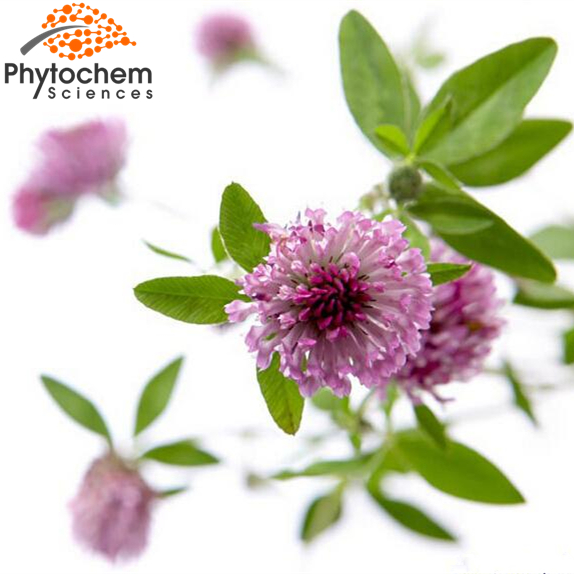 High quality Red Clover Extract 8% Isoflavones