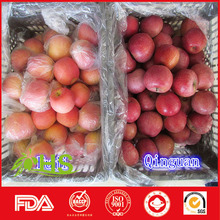 Hot selling 2015 new fresh fruits red fuji apples made in China