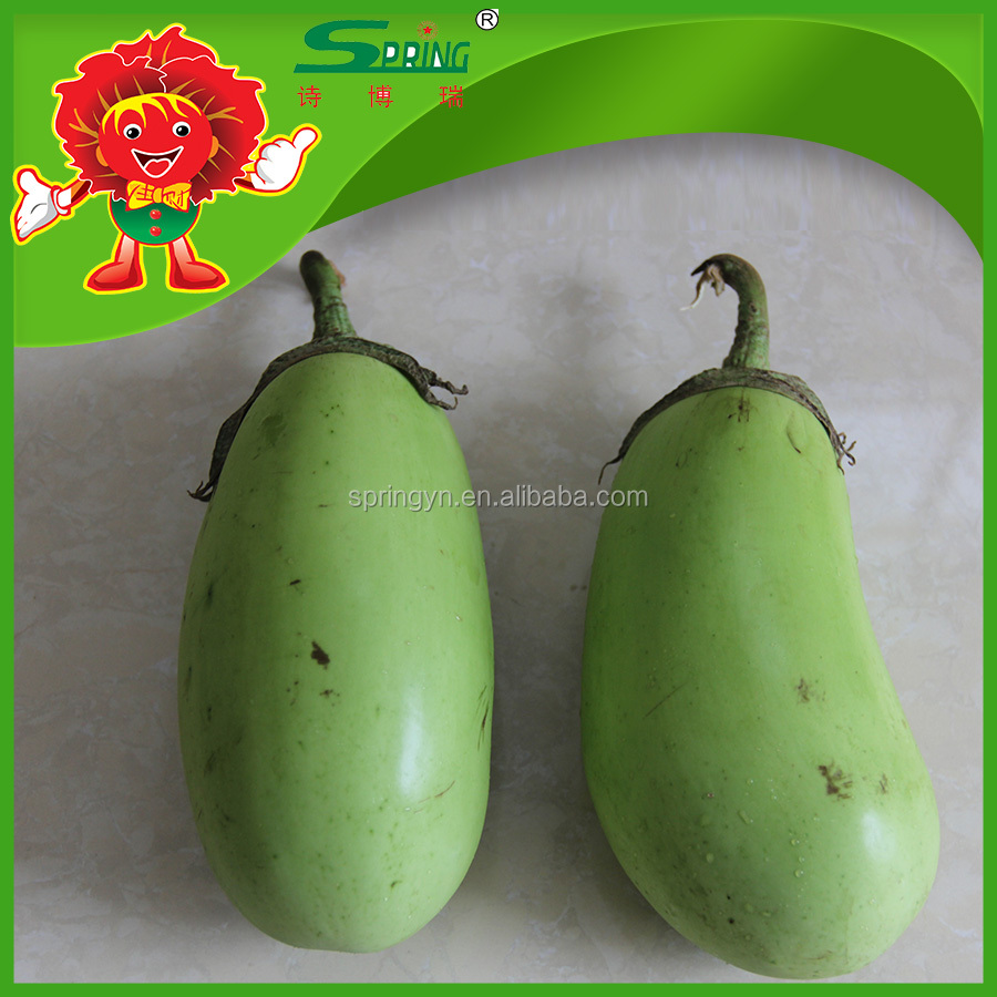 Organic fruit vegetable green eggplant competitive price eggplant