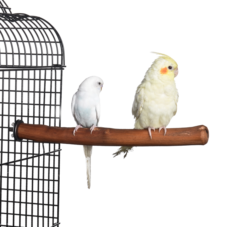 Natural Wood Parrot Bird Perch