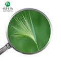 High Quality 100% Organic Barley Grass Juice Powder