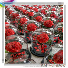 Long lasting preserved roses in glass dome