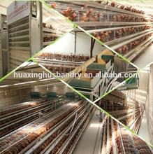 battery cages laying hens /layer cage/layer poultry farms