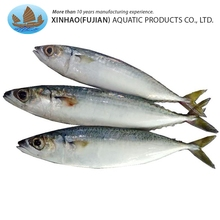 Superior quality wholesale frozen canned jack mackerel fish for sale