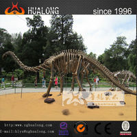 sell museum high simulation dinosaur skeleton model in china