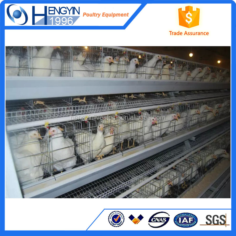 Poultry chicken layer cage and animal cage and Smaller chicken cage
