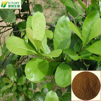 manufacturer supply natural yerba mate straw extract