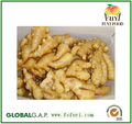 china supplier fresh dry ginger processing plant