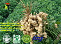 High quality crop Chinese round baisha raw peanuts for sale