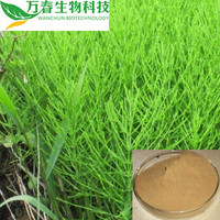 Factory Provide Best Horsetail Herb Extract