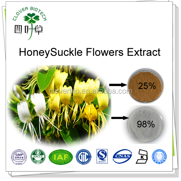 25% 80% 98% natural Chlorogenic acid extracts from Flos Lonicerae