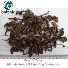Dried Cats whiskers or Java tea with Latin name Orthosiphon aristatus Clerodendranthus spicatus